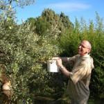 Bar. Olives
